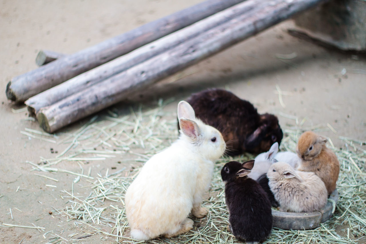 Beautiful stock photos of easter bunny, Animal Family, Animal Themes, Animal Wildlife, Animals In The Wild