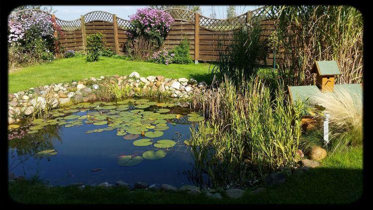 Relaxing Enjoying Life Chillen At Home No Filter, No Edit, Just Photography #backyard #natur