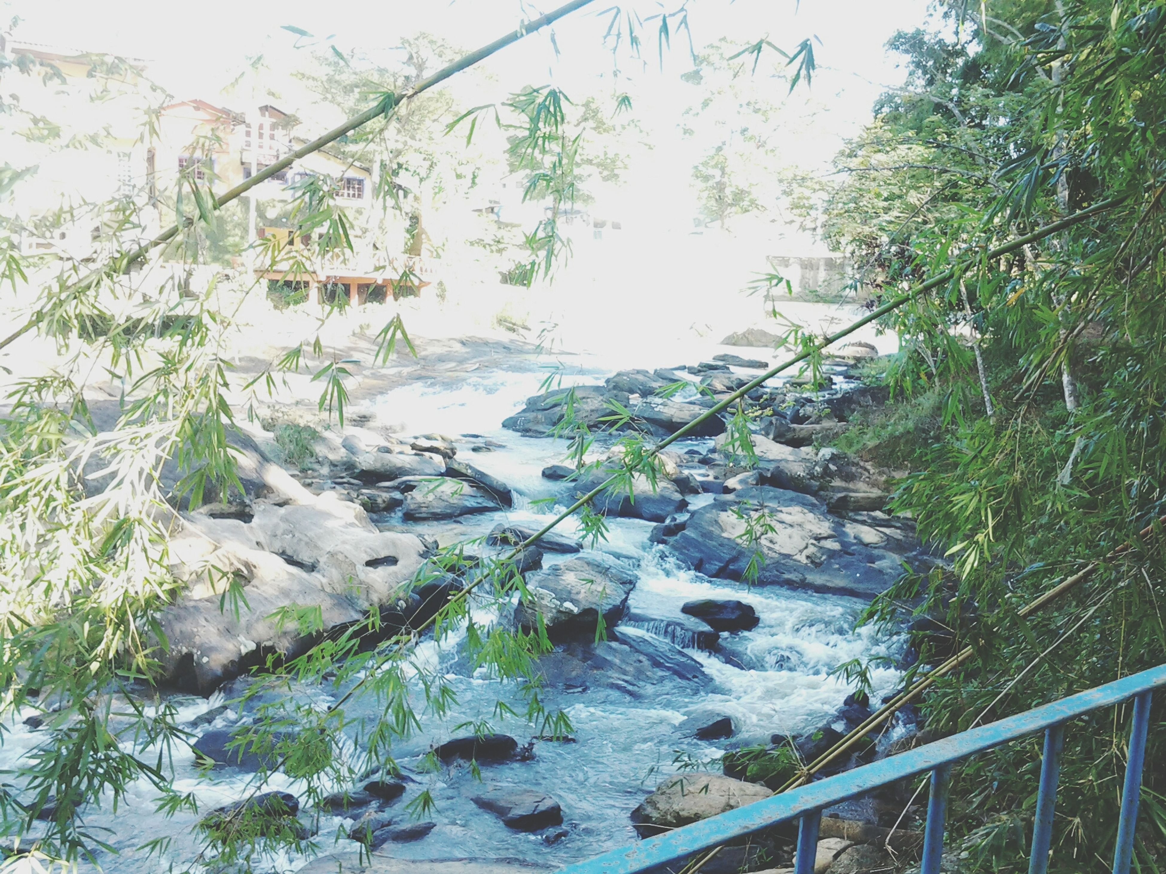 water, rock - object, tree, nature, tranquility, scenics, plant, beauty in nature, tranquil scene, clear sky, river, railing, growth, day, green color, no people, outdoors, built structure, mountain, flowing water