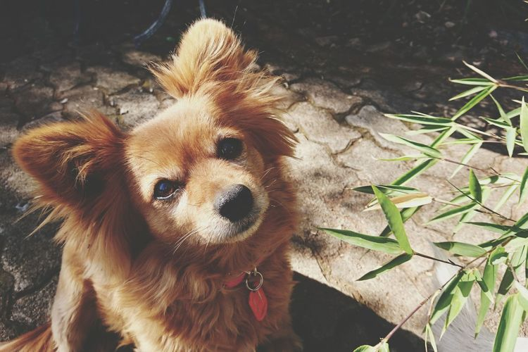 Puppy Amber Brown Fur Brown Cognac Eyes Complimentary Colors Green Bamboo Leaves Animal Animal Lover EyeEm Puppy Love PhonePhotography Phoneography Showcase July 2016 Home Is Where The Art Is EyeEm Gallery EyeEm Animal Lover Eyeem Market