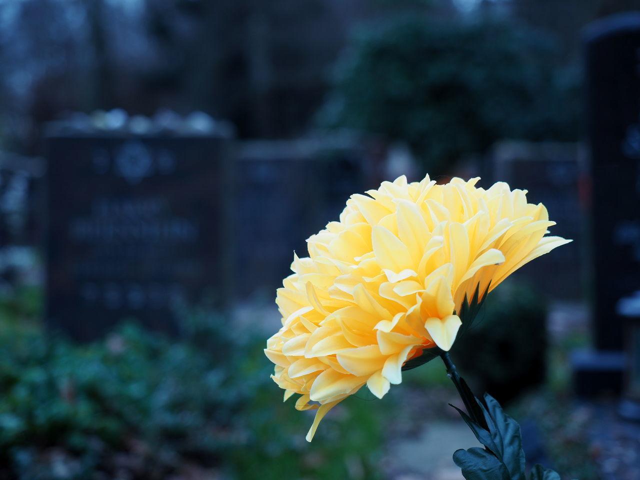 Blumen Cementery Flower Flowers Friedhof Grabschmuck Grabsteine Gravestone Nature Yellow
