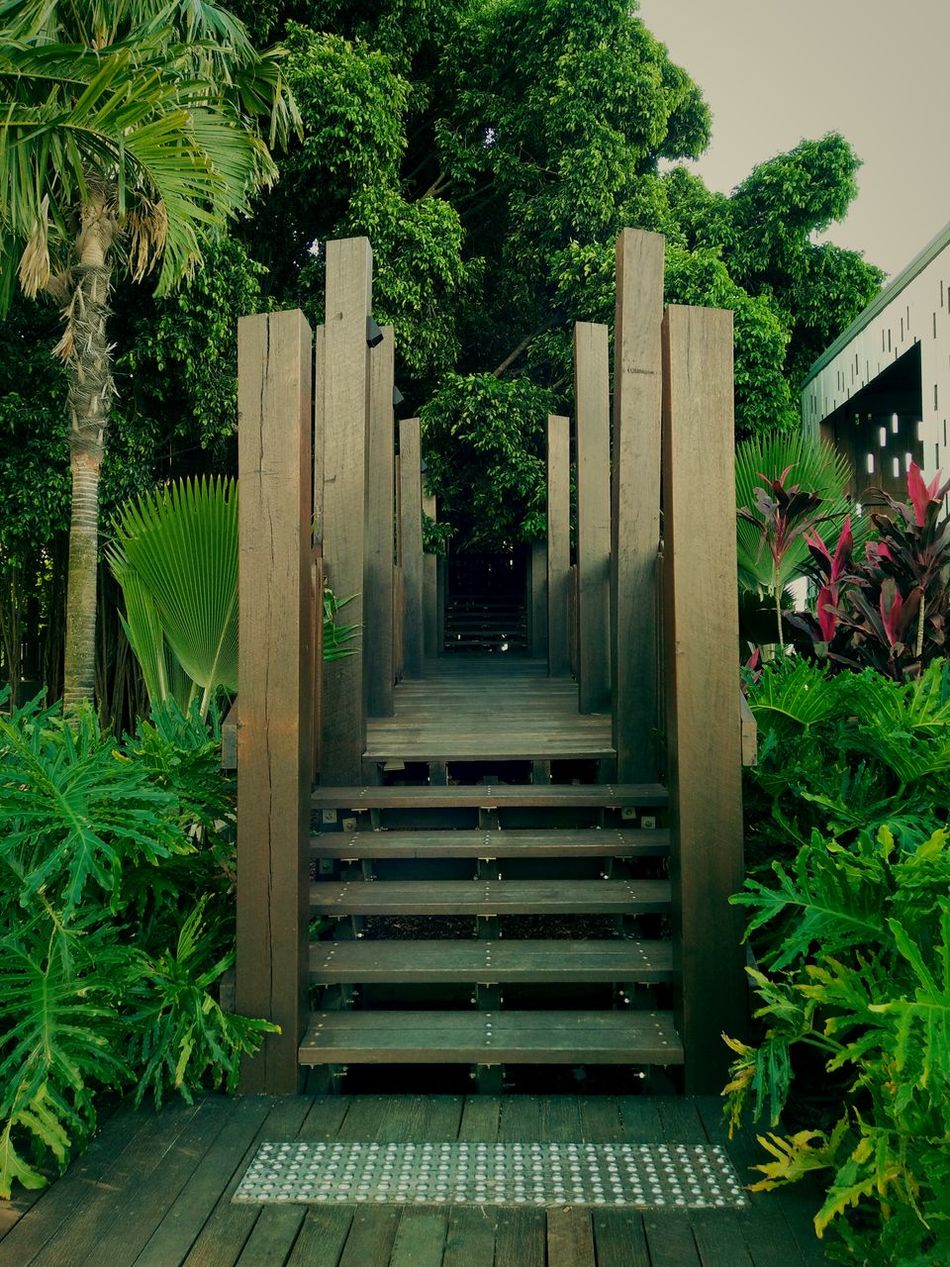 Awesome photography of beautiful wooden playground hallways around a large fig tree. Beautiful Photo 👌 Beautiful Photography💕 Green Nature Garden_styles Green Garden Shades And Shadows Shades And Light Wooden Playground Wooden Texture Awesome Photography ^_^ Garden Photography Peaceful View All Green 🌴☁🌲 Plants 🌱 Walkway Wood