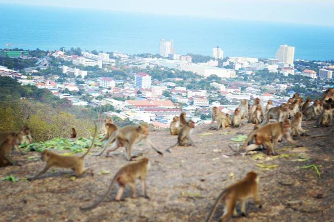 Monkeytown Monkey Monkeys City Animals Travel Trip Huahin Monkeymountain Thailand