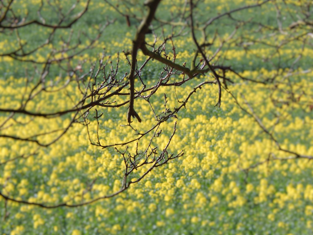 Beauty In Nature Branch Close-up Day Growth Nature No People Outdoors Sky Sprigs Spring Into Spring Tranquility Tree Yellow Flower