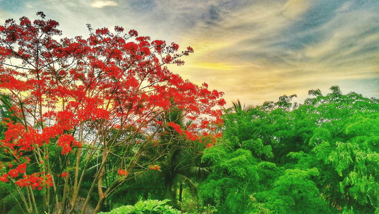 Huwei P9 contrest Nature Beauty In Nature Red Flower Green Summer Landscape Myanmar View Mawlamyaing Trip Taywai Ayechan