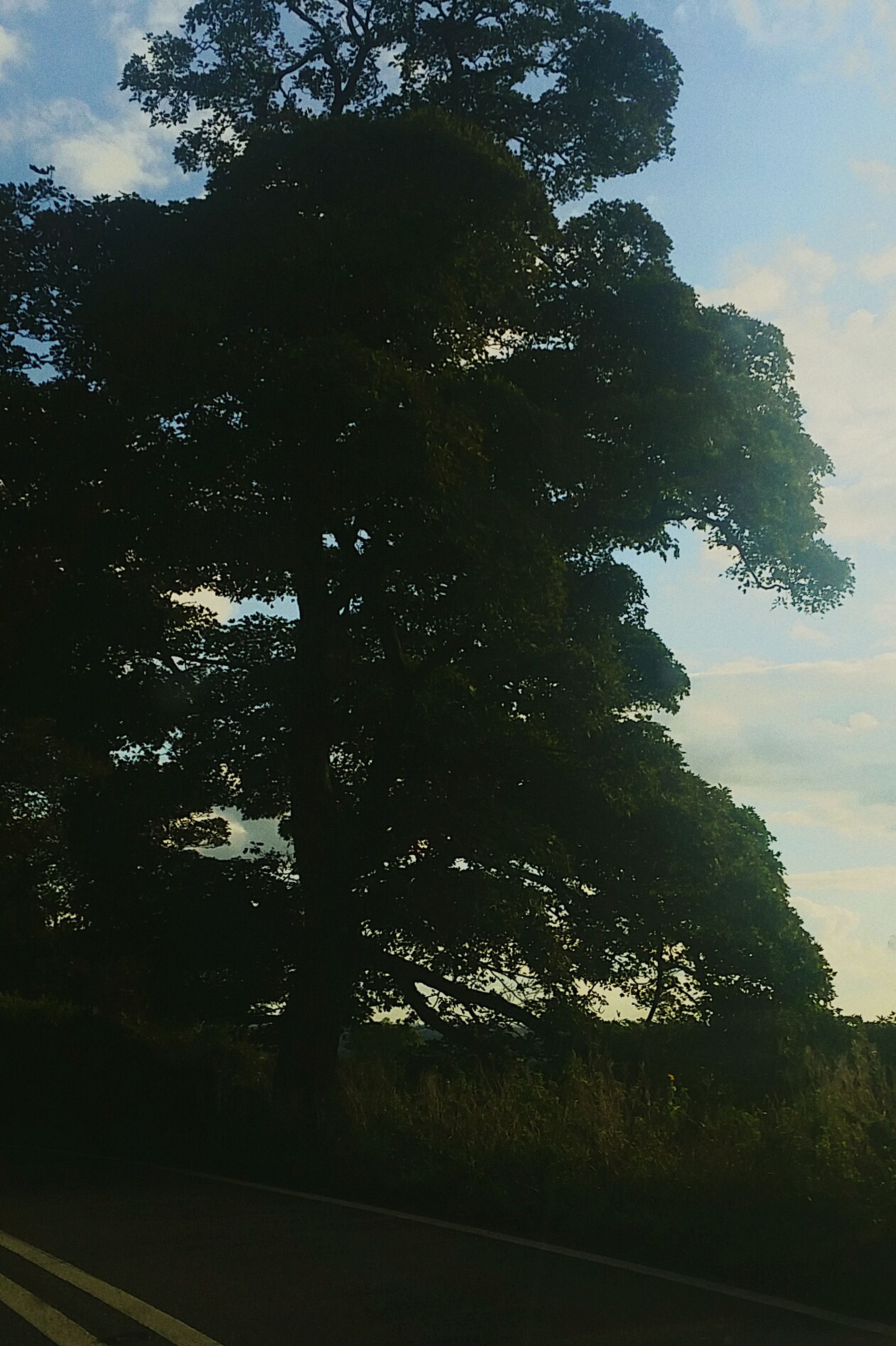 tree, tranquil scene, tranquility, silhouette, growth, sky, scenics, nature, non-urban scene, outdoors, beauty in nature, dark, day, remote, solitude, tall - high, no people, outline, pine tree