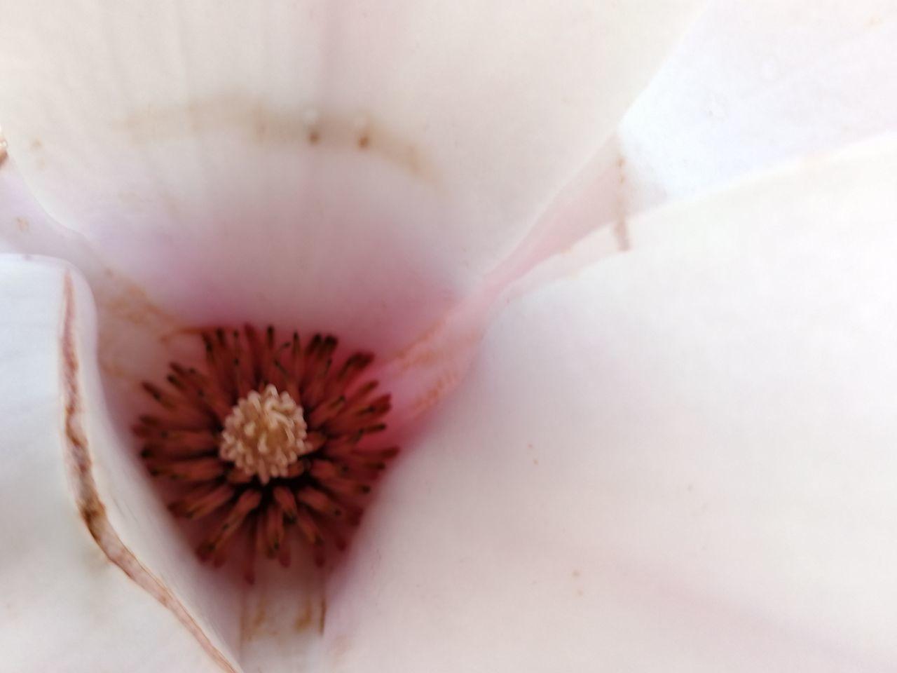 Spring Springtime Close-up No People Vscogrid VSCO Nature Outdoors Flower Flower Head Magnolia Magnolia_Blossom Details Of Nature Detail