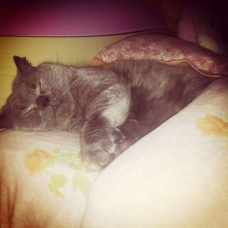 Miao notte♡♥