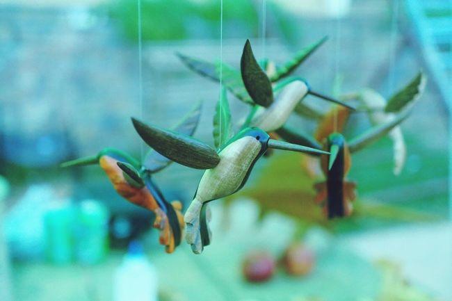 Havanna, Cuba Enjoying Life Light And Shadow Capturing Freedom Birds Getting Creative