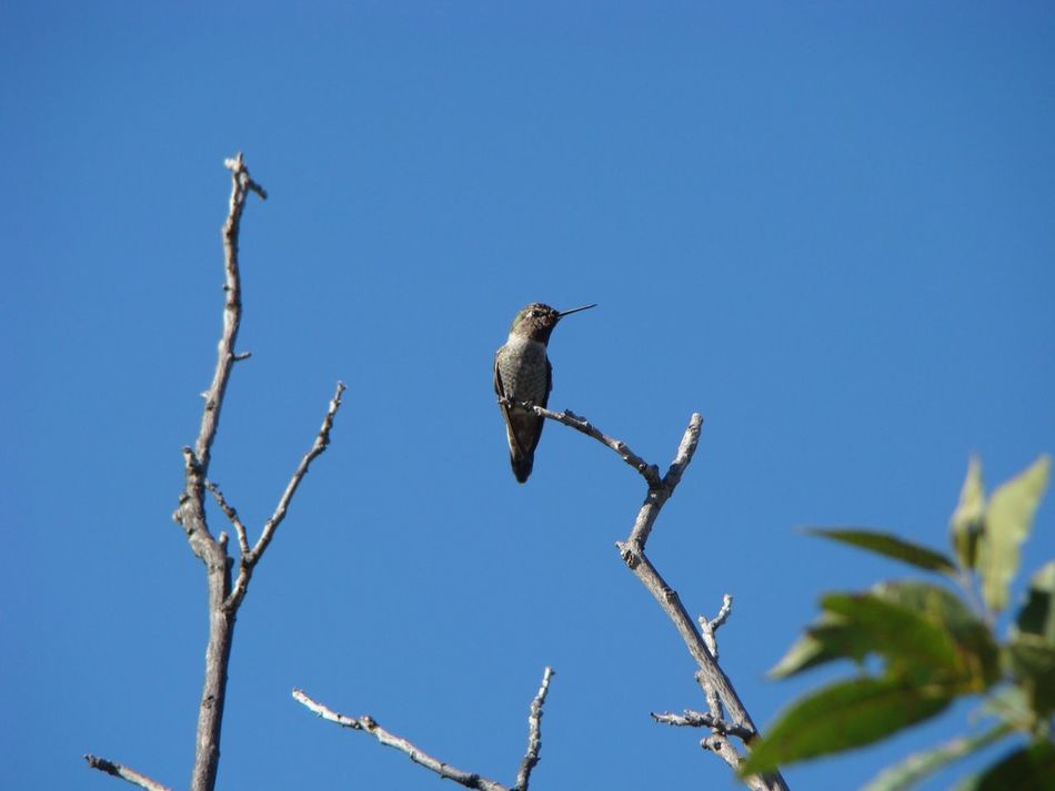 Beautiful stock photos of hummingbird, Animal Themes, Animal Wildlife, Animals In The Wild, Bird