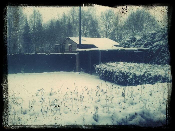 Snowwy Garden