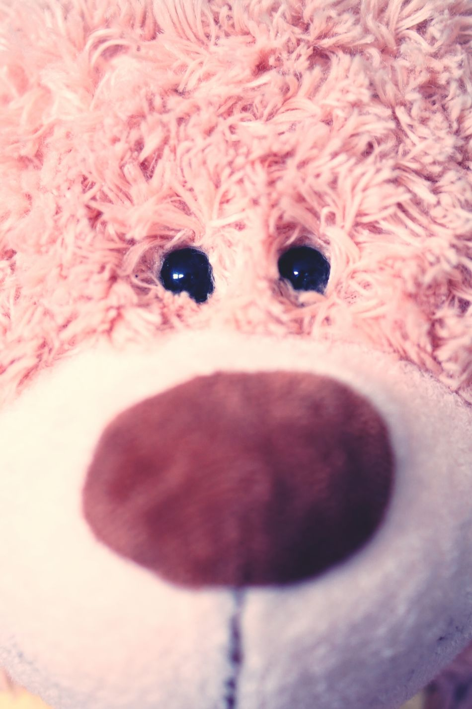 Nose-up Teddylove Teddy Bear Teddybär Teddy Ear Focus On Foreground Fragility Sweet Sweetness Eyes Are Soul Reflection Eyes Eyes Watching You Eye Nose Soul Soulmate Sweetheart