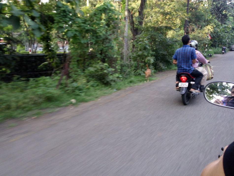 Heyyyy, Street Photography On Bike Hero Honda Stray Doh Street Dog Traveling EyeEm Best Shots Greenary EyeEm Gallery EyeEm World Club Photo 🌎📷 Week On Eyeem Best Of EyeEm But Still A Lot To See In Nagpur,India