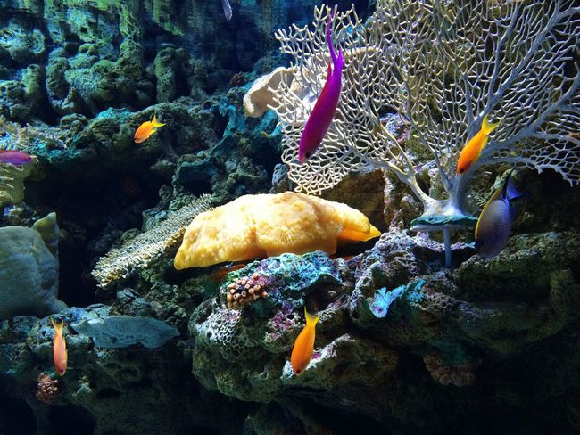 Taking Photos Hello World Enjoying Life Fish Relaxing From My Point Of View EyeEm Nature Lover Exceptional Photographs Colour Of Life Beauty In Nature Sea Life Aquarium Underwater Shootermag Ocean Oceanlife Water Backgrounds Pivotal Ideas Enjoying Life Underwater Photography Underwater World