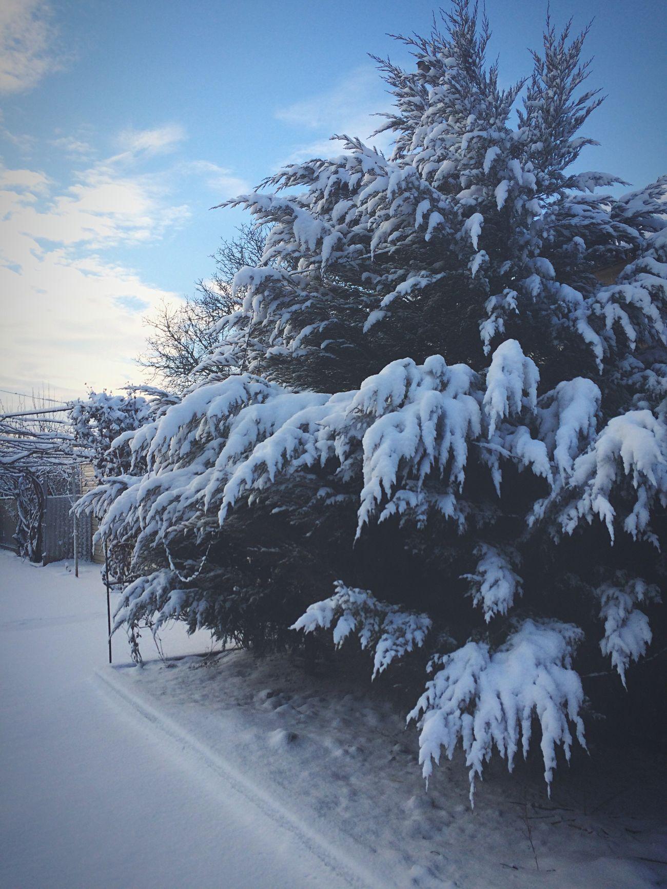 Ukraine 2017 January 2017 Snow Winter Photography Photo Cold Temperature Tree Morning Мариуполь украина зима январь снег утро фото Mariupol