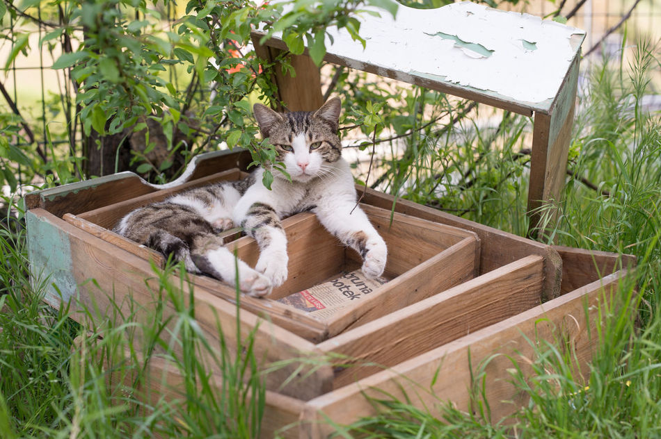Stray Cat in an old Drawer Animal Themes Cat Cats Cats Of Istanbul Cat♡ Domestic Animals Feline Grass Mammal Nature No People One Animal Outdoors Sitting Stray Animal Stray Cat ミーノー!!