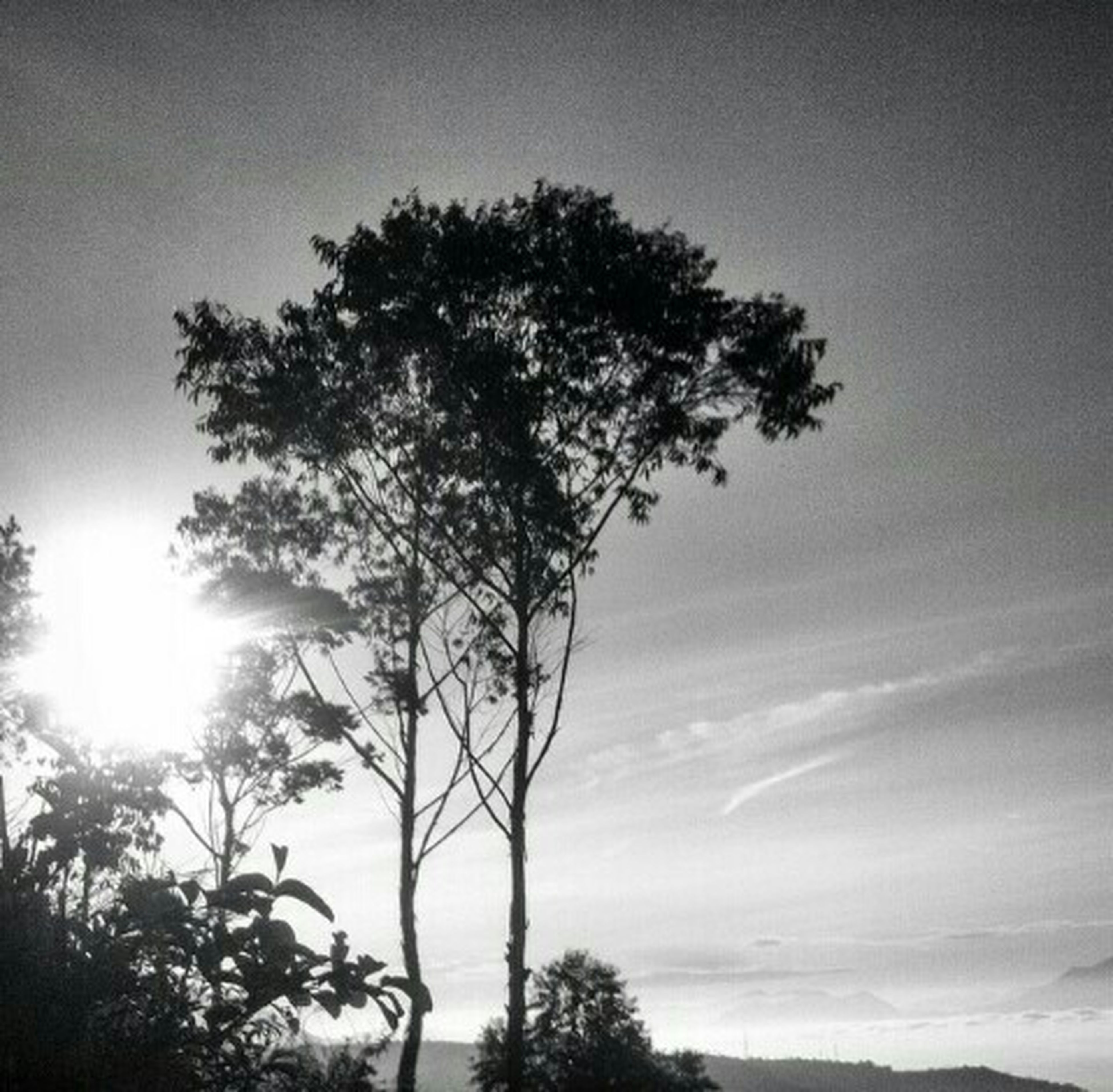 tree, silhouette, tranquility, sky, low angle view, tranquil scene, beauty in nature, nature, scenics, sun, branch, growth, sunlight, sunset, tree trunk, outdoors, sunbeam, no people, idyllic, bare tree