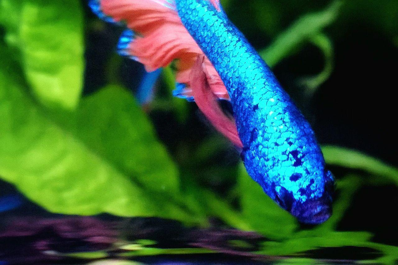 Multi Colored Close-up Betta Splendens Nanotank Underwater Aquarium Photography Aquarium Life Aquarium Beauty In Nature Phonegraphy