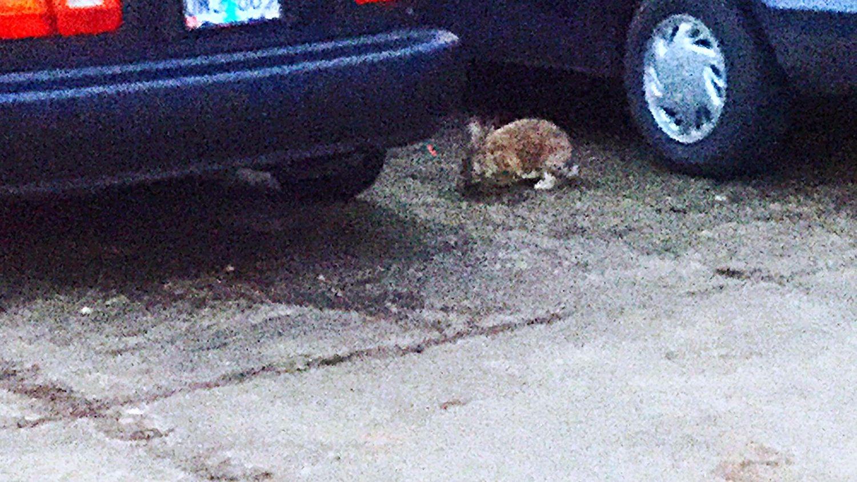 Bunny  Lonely Bunny FLUFFY BUNNY Cute Animals Brown Bunny