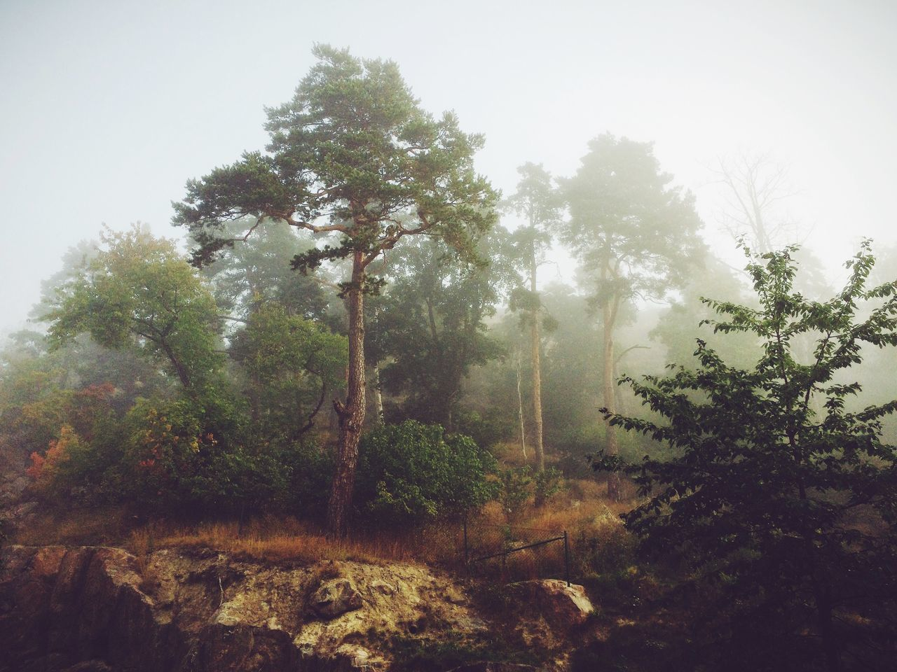 Trees Growing In Forest During Foggy Weather