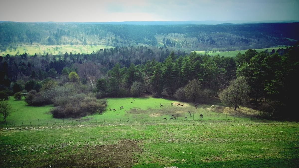 Bieszczady Mountains_herd of fallow deer Nature Landscape Outdoors Beauty In Nature Bieszczadymountains Fallow Deer Herd Animal Travel Photography Poland Mountains Domestic Animals Animal Themes Animals In The Wild