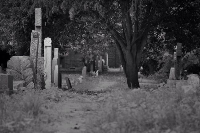 Black & White Old Cemetery Churchyard Burial Ground Graveyard Graveyard Beauty Blackandwhite Black&white Photography Creative Photography Canon Canonphotography South West London Monochrome Blancoynegro