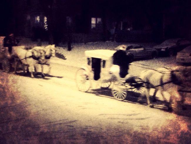 Christmas Snow Horses