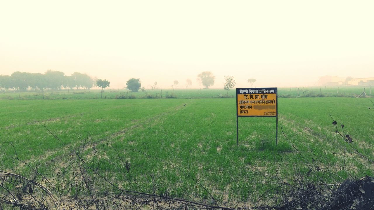 Agriculture Field Nature Green Color Landscape Fog Rural Scene Tranquility No People Sky Beauty In Nature Outdoors Day Pravshoot Freshness Growth Focus On Foreground No Body Beauty Minimalist Architecture The City Light