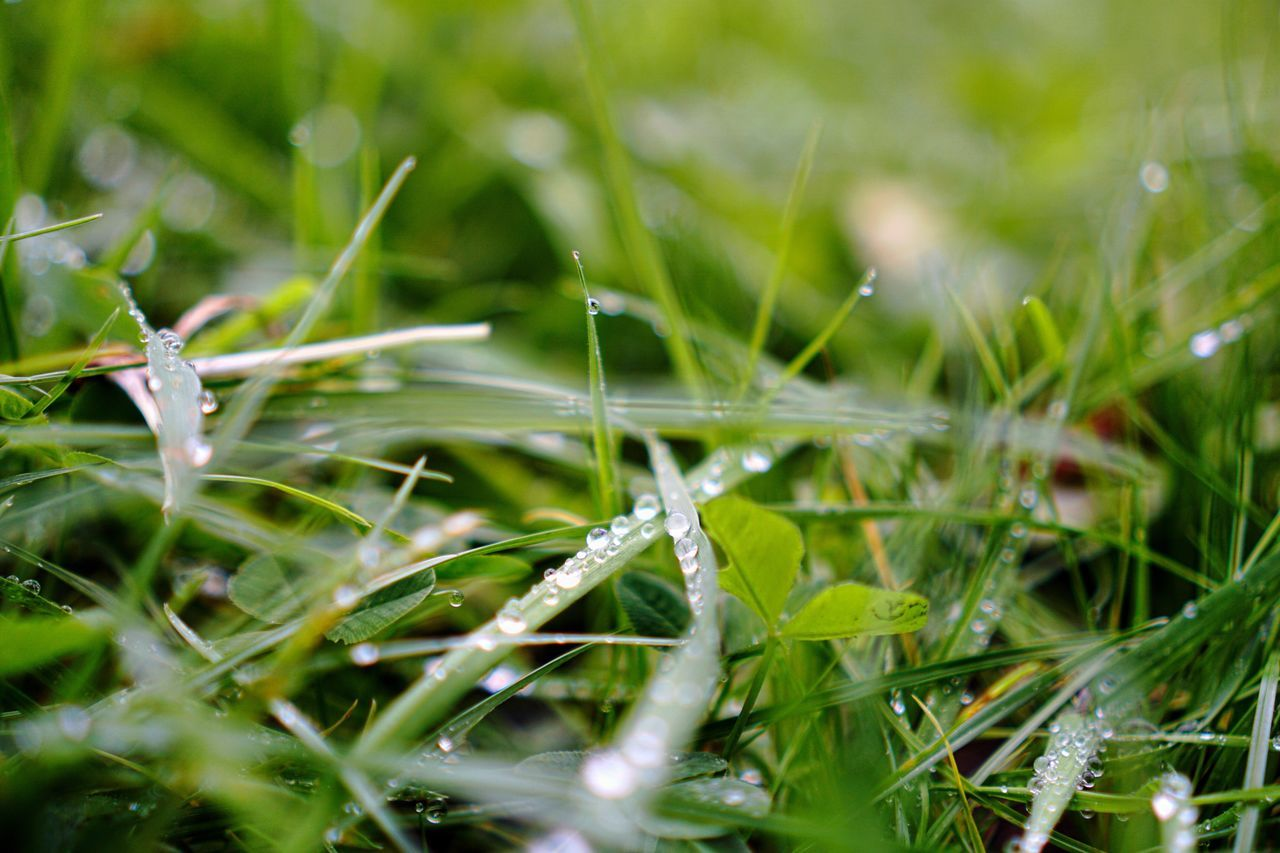 Grass Drop Nature Wet Water Growth Close-up No People Green Color Dew Outdoors Beauty In Nature Fragility Plant Freshness Droplet Blade Of Grass Nature Green Rain