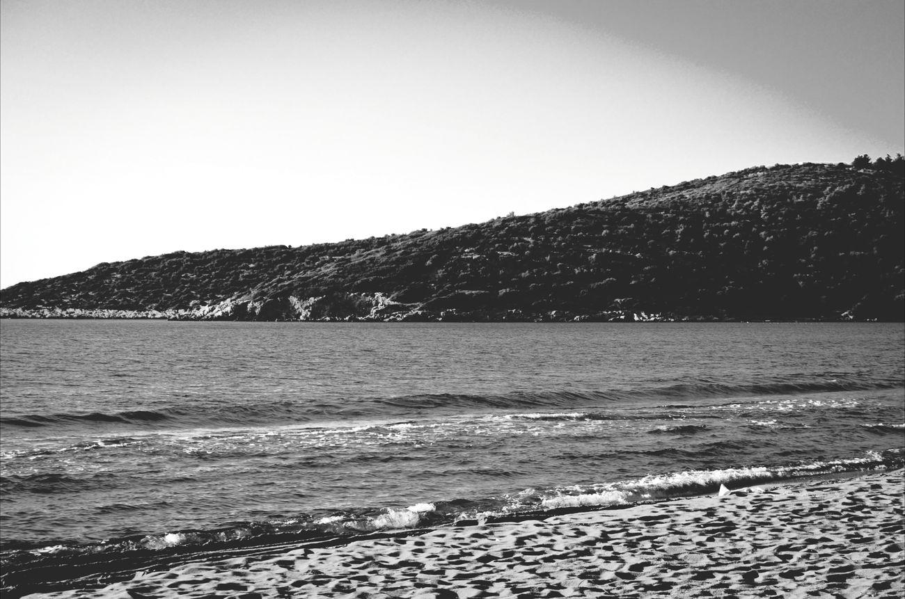 Life Is A Beach Sea Life Blackandwhite EyeEm Nature Lover