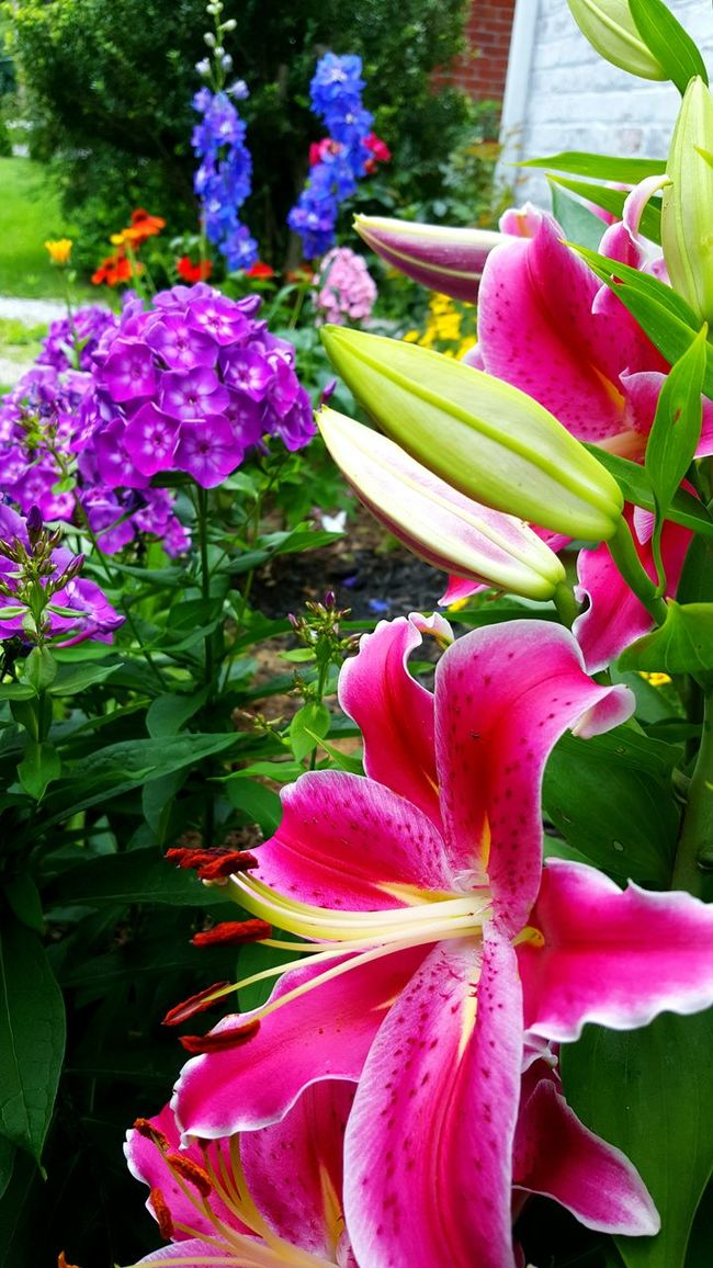 Flowers Summer Exotic Flowers Landscaping Plants Tulips Bright Colors Everyday Life Simple Slow Living Vibrant Humid Climate Warm Lush Foliage