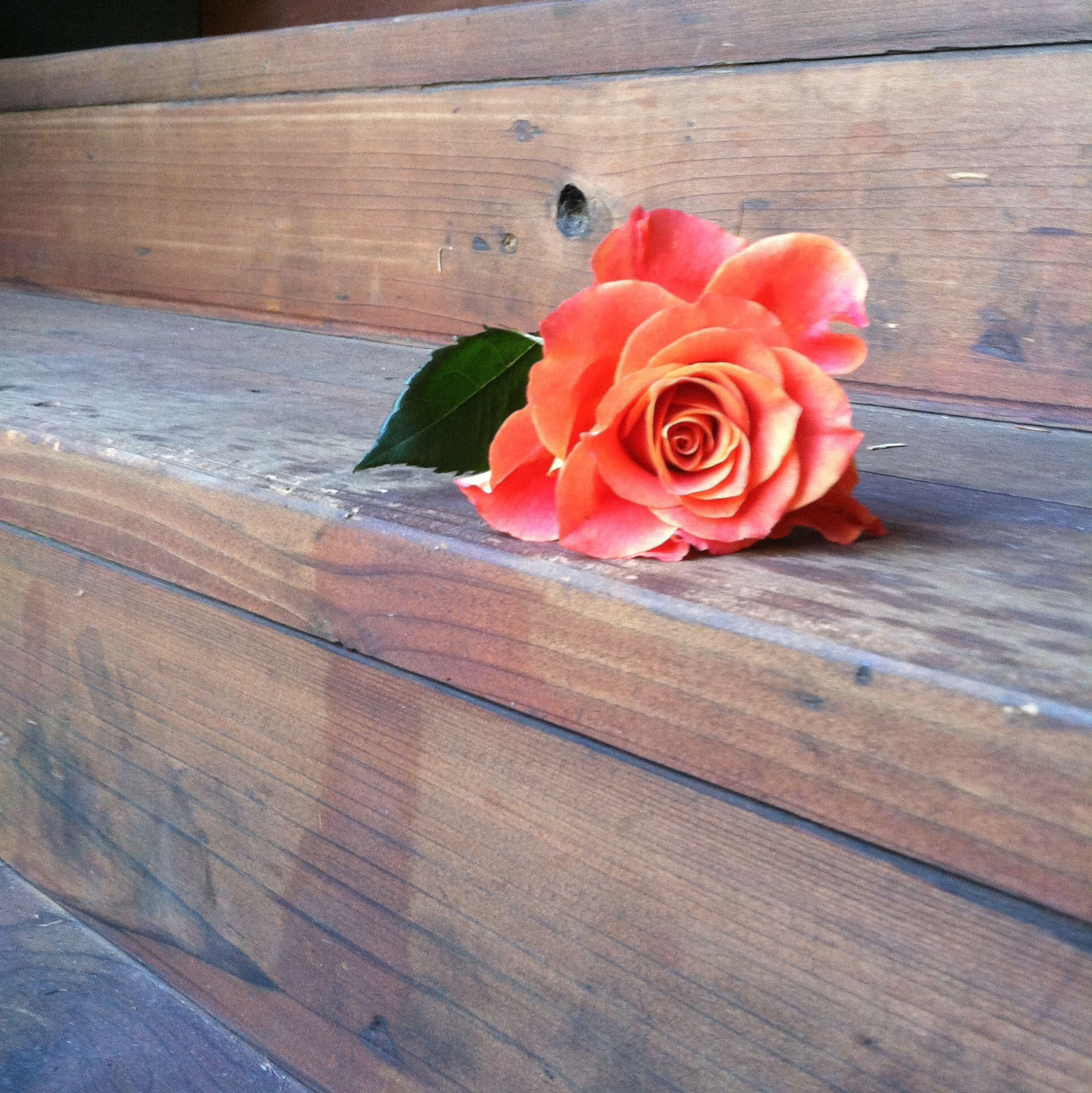 Flower Cabin Steps No Edit/no Filter