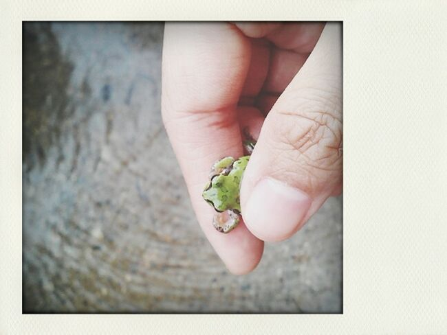 Frog 백일홍