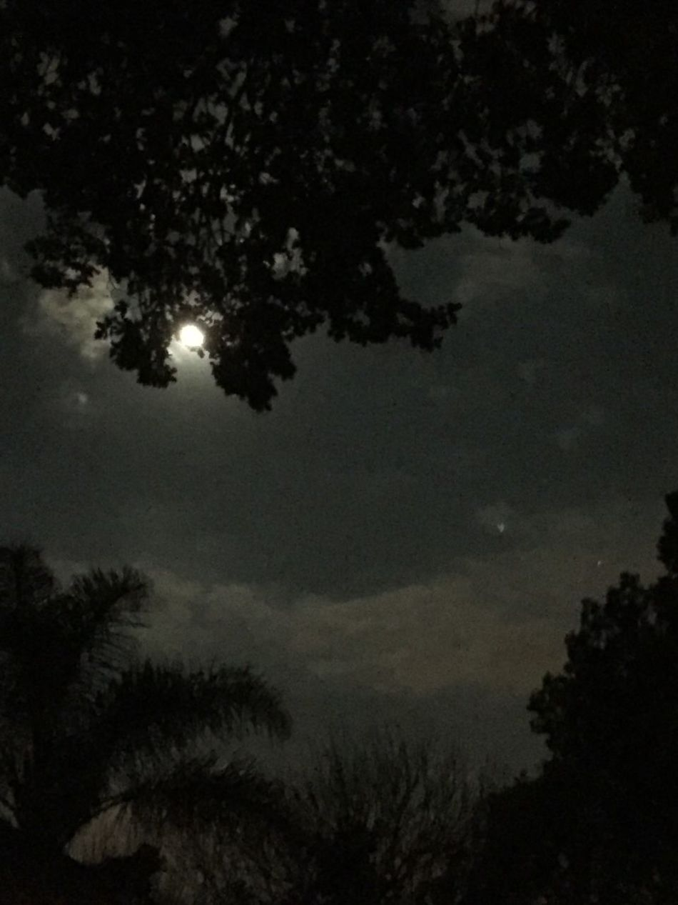 Cities At Night Taken With IPhone 6 IPhoneography Night Moon And Clouds Single Star Trees Johannesburg Night No Edits No Filters As Is Suburban Garden And Sky At Night Full Moon Night  No People Dark Sky Black Autumn Night