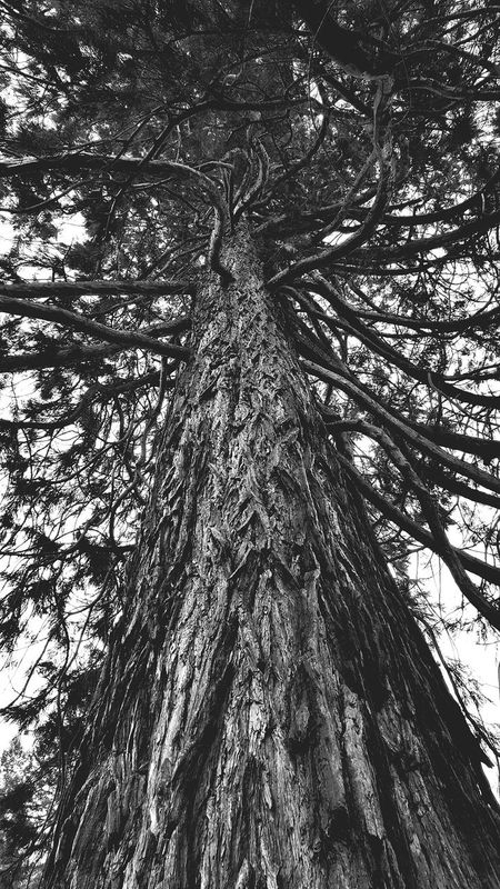 Black And White Blackandwhite Photography Taking Pictures Taking Photos Treescapes For The Love Of Trees ~ EyeEm Trees Tree Art Tree Silhouette Tree Porn Tree And Sky EyeEm Best Shots - Trees Sky And Trees Tree_collection  TreePorn Showcase: January Black And White Friday