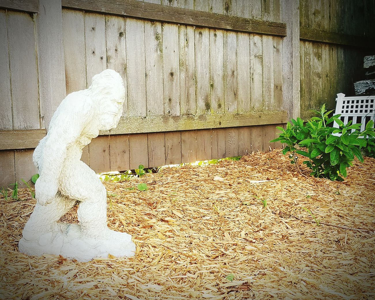 Taking Photos Sasquatch Backyard Photography Backyard Of House Garden Statue Hanging Out