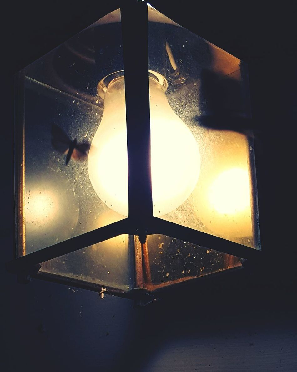 Taking Photos From My Point Of View Fresh On Eyeem  Insects Collection Insect Paparazzi Insect Photography Moth Moth To A Flame Light Lightbulb Flying Insect Silence Of The Night