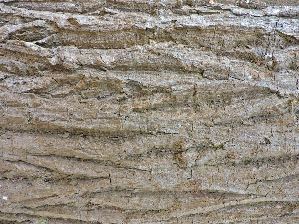 Texture, surface of wood, found in one of the woods of Brazil. Backgrounds Backgrounds Wood Beautifully Organized Beautifully Organized Canon Beautifully Organized, BeautifullyOrganized Canon Canon Beautifully Organized Natural Wood Texture, Of The Details Of Brazil's Forests Patten Rafael Vilalta Rafaelvilalta Texture, Surface Of Wood, Found In One Of The Woods Of Brazil Textures And Surfaces Vwolfenbr Wood - Material Wood Pattern