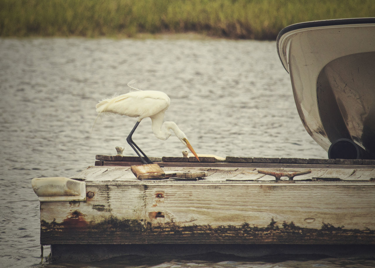 Boat Egret Egret Enjoying Life Egret On Floating Dock Saltwater Saltwater Life Seabird White Egret On Dock
