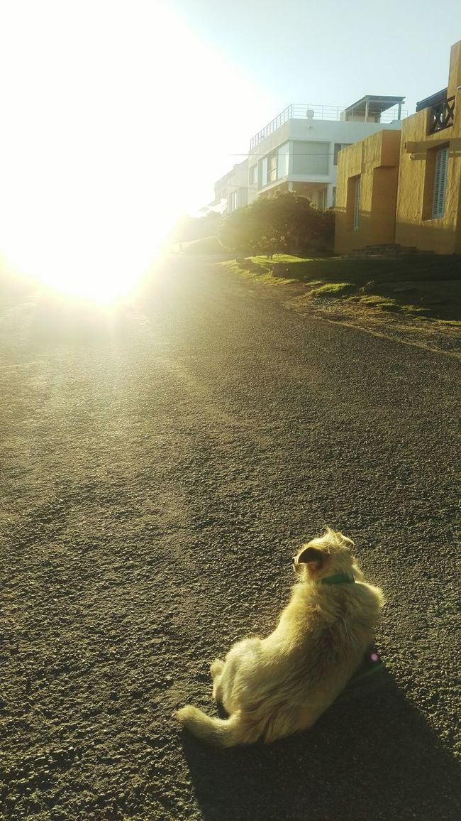 Sunlight Architecture Building Exterior Sun Outdoors Nature Sunny Tranquility Lens Flare EyeEm Best Shots EyeEm Architecture Built Structure Pathway To Heaven Path Dog Dogs Of EyeEm Dogslife Dog Portrait Dogmodel Light Sunset