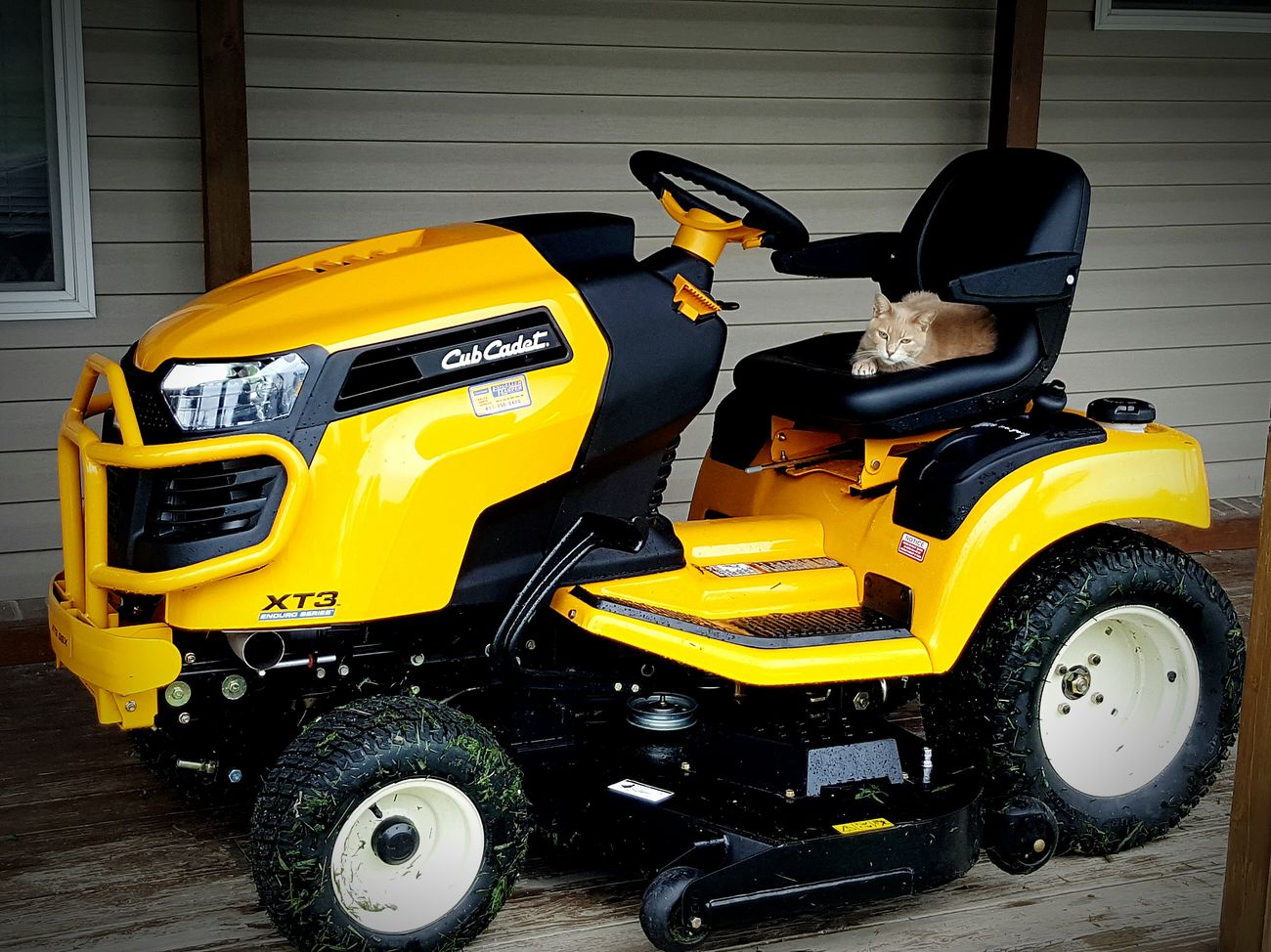 Mower New Toys Mine ❤ Country Girl Countrylife Yellow Color Power House Yard Work Cat♡ ~Jackie ~ Adult Toys