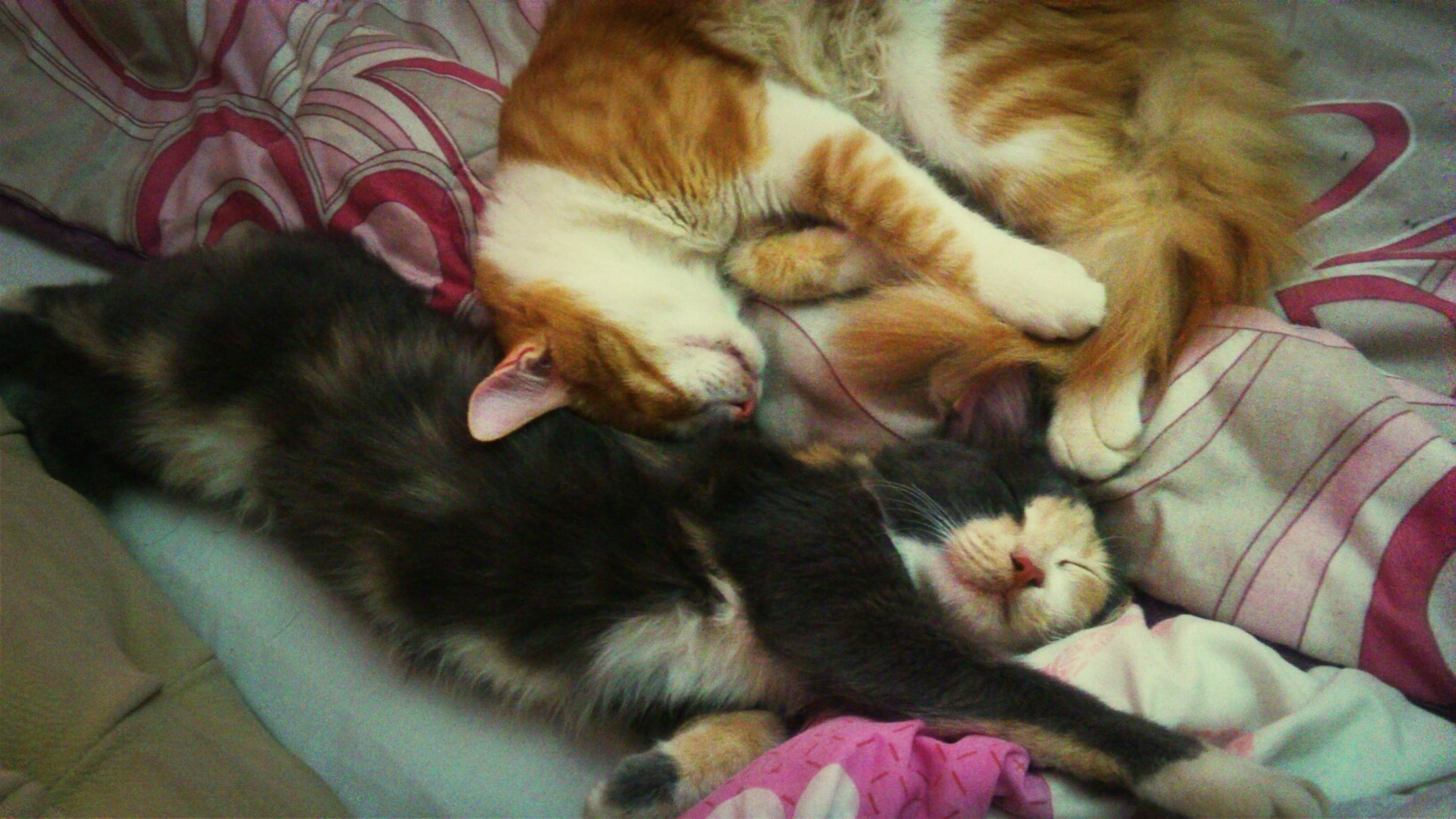My Cats :* MY BABYS!