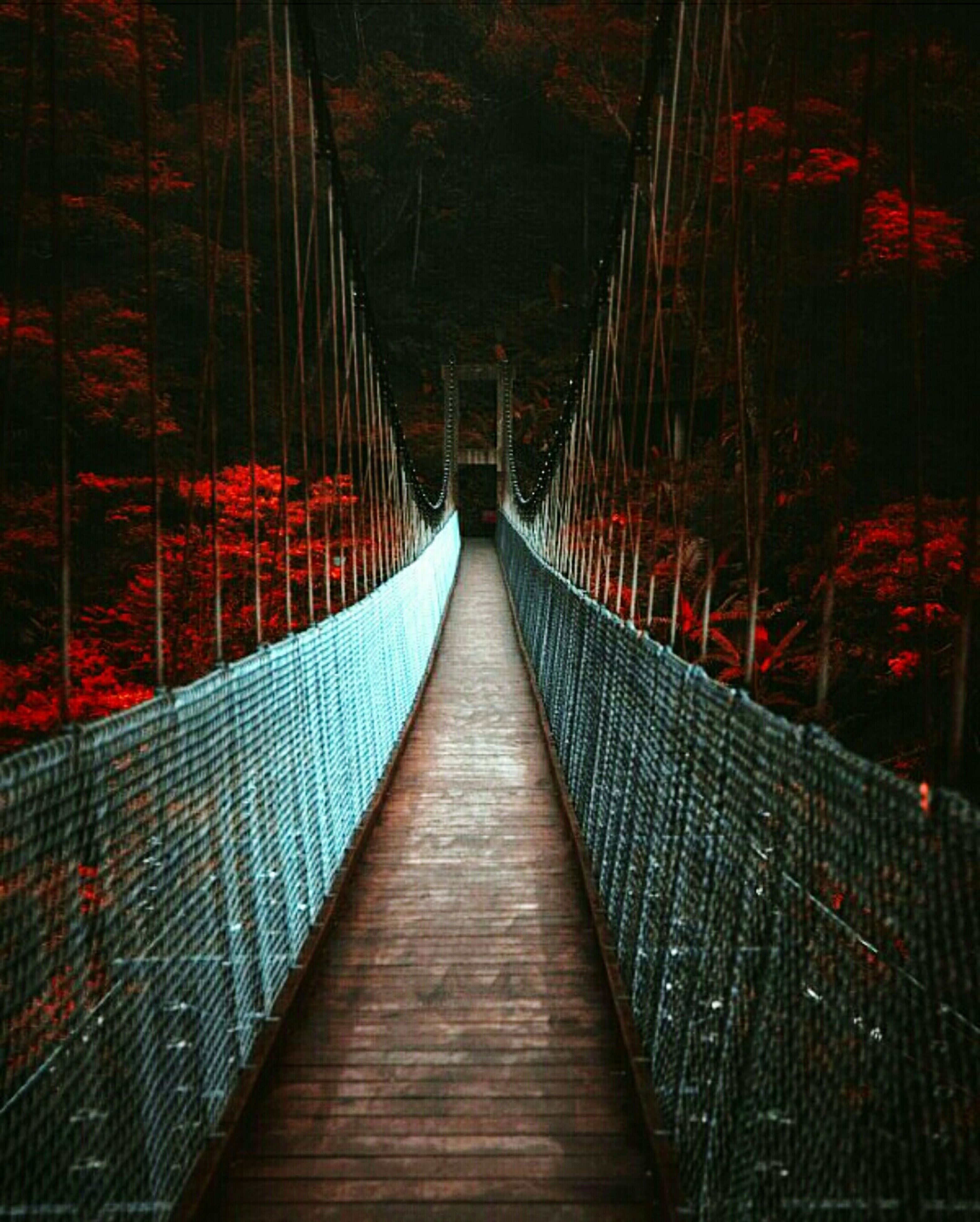built structure, architecture, the way forward, connection, bridge - man made structure, footbridge, railing, diminishing perspective, bridge, water, tree, metal, vanishing point, no people, night, red, outdoors, illuminated, building exterior, reflection