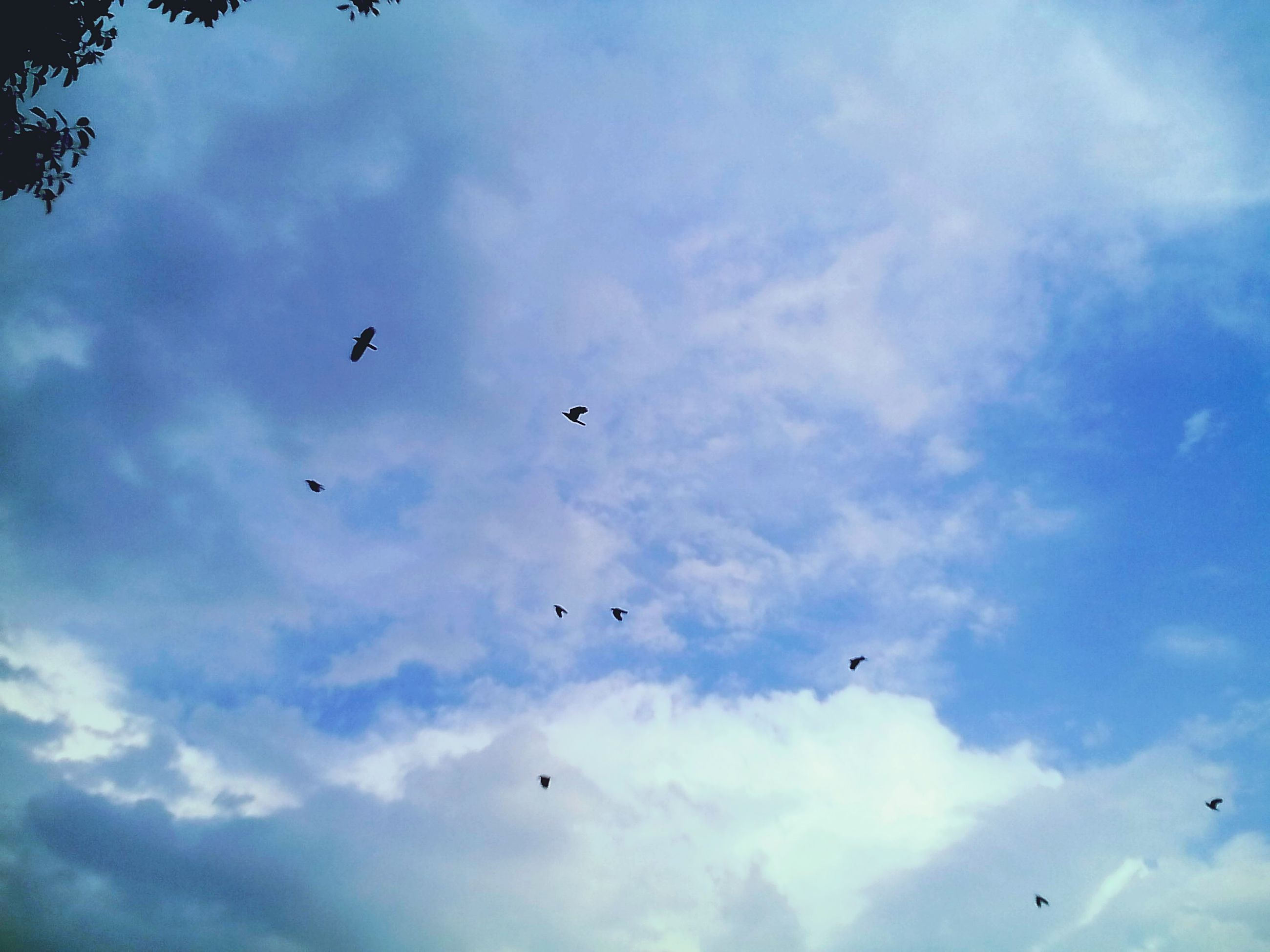 flying, sky, cloud - sky, bird, mid-air, freedom, low angle view, animal themes, nature, outdoors, no people, migrating, day, beauty in nature