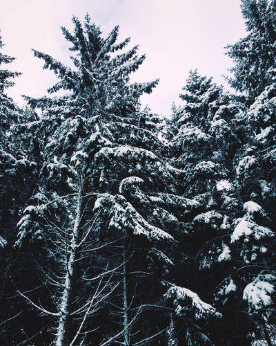 Snow ❄ Winterwonderland Blizzard Snowing Hagen Wintertime Winter White Trees Check This Out Taking Photos Enjoying Life