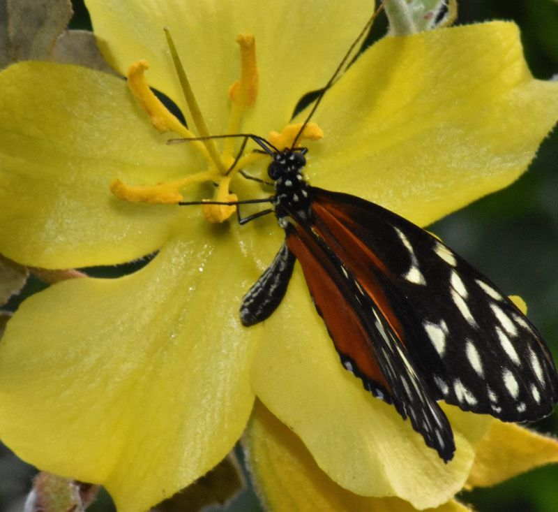 Butterfly Flower Balancing Elements Capture The Moment Wildlife & Nature Insects  Freedom Outdoor Photography Habitat Flora Fauna Exotic Exploring Above The Ground Natural Beauty Close-up Yellow Tropical Paradise