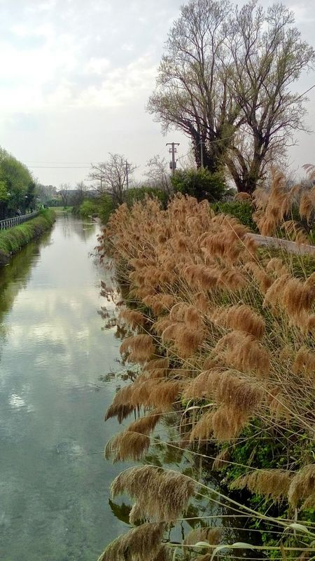 Tree Nature Water Reflection Sky Rushes Bits Rushes Beauty In Nature Growth Outdoors No People Landscape Day Scenics Canal Cernusco Sul Naviglio Italy🇮🇹 Springtime