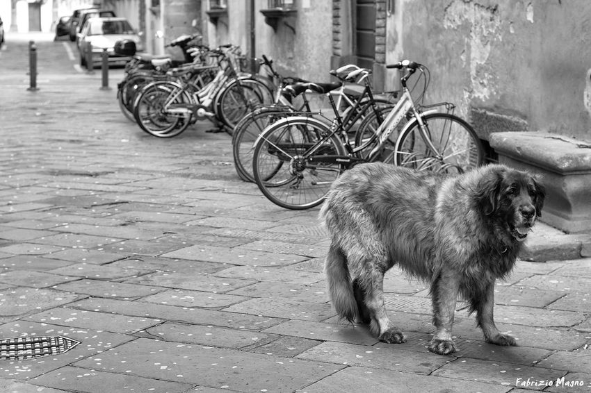 Walk the dog. Dog Love Dogs Instadog Dogstagram Dogstyle Dogstargram Doglovers Beautiful Cutie Animal Petstagram Dogoftheday Whiteblack Blackandwhite Fashion Bw Taking PhotosWb Instagood Bw Wb Pets Corner