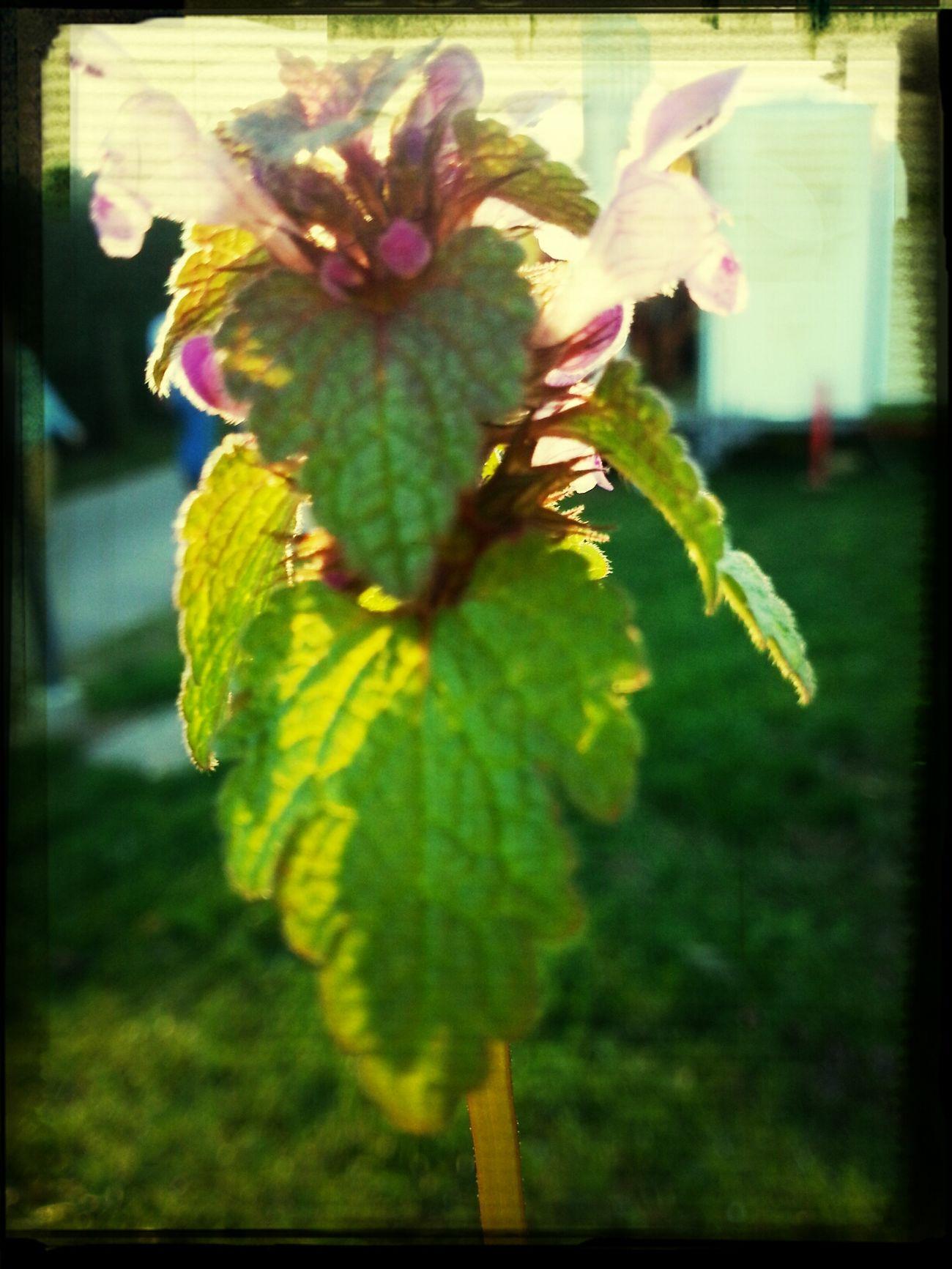 flower and sun Flower Sunshine
