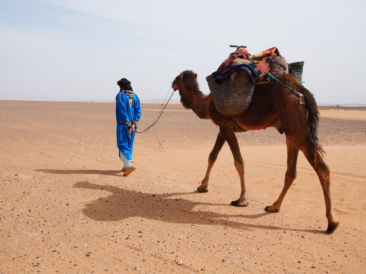 Beautiful stock photos of camel, Animal Themes, Camel, Day, Desert